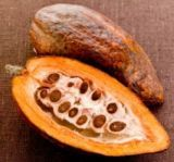 Untul de cacao si proprietatile sale