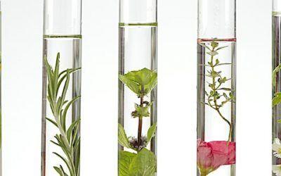 5 plante pe care le puteți crește acasă pentru a avea tenul veșnic tânăr