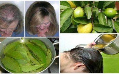 Frunzele acestei plante pot opri 100% căderea părului și vor stimula regenerarea acestuia!